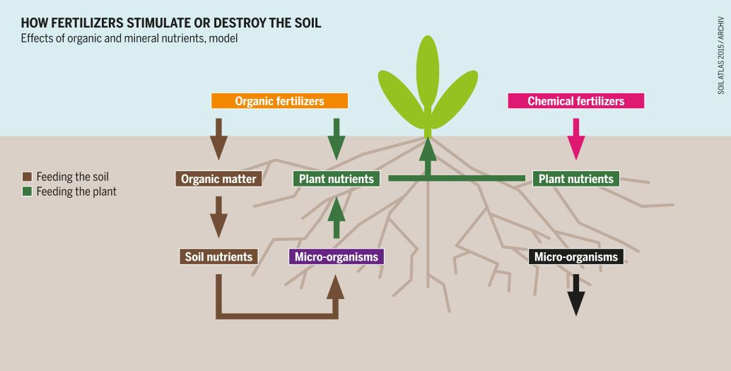 How fertilizers stimulate or destroy the soil